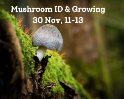 Mushroom ID and Growing – 30th November