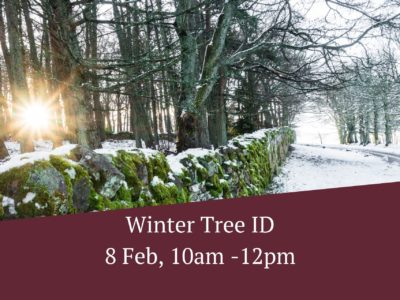 Winter Tree ID – 8 Feb
